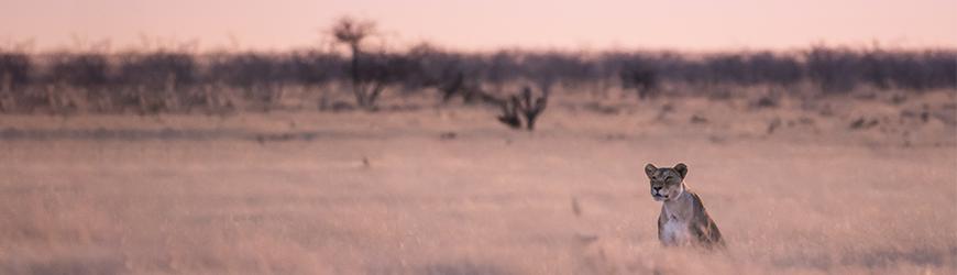 /dierenfotografie-locaties
